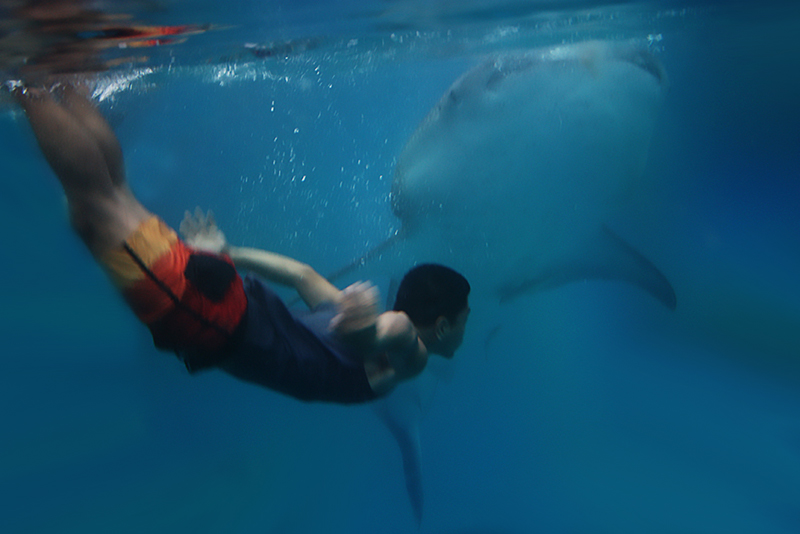 Me with the whale sharks of Tan-awan, Oslob